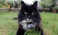 """""""La vida secreta de los gatos""""BBC"""